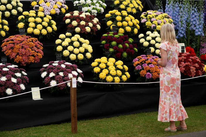 A visitor looks at a display at the Royal Horticultural Society's Chelsea Flower show in London, Britain, May 22, 2017. REUTERS/Dylan Martinez