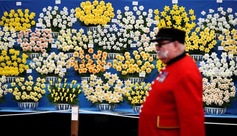 A Chelsea Pensioner walks past a display of daffodils at the Royal Horticultural Society's Chelsea Flower show in London, Britain, May 22, 2017. REUTERS/Dylan Martinez