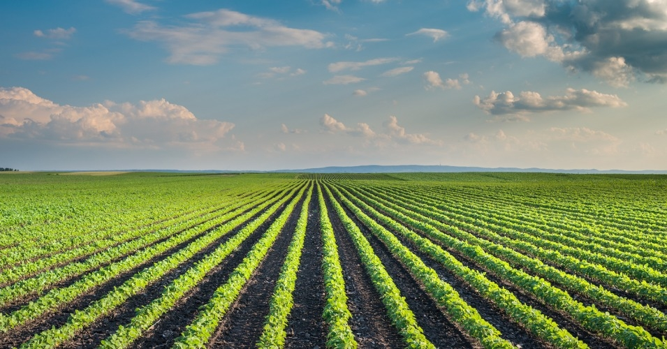 asian agri and the future of Agriculture and food production seem to be under constant threat from climate  change, policy failure and new diseases in meeting the demand.